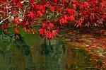 autumn-78090_150
