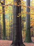 forest-79660_150