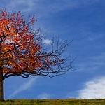tree-100163_150