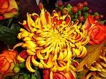 chrysanthemum-57878_150