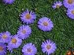 aster-79508_150