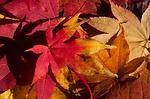 autumn-200293_150