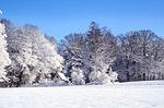 winter-22506_150